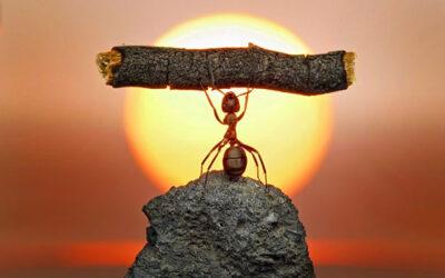 Mensaje de las Hormigas