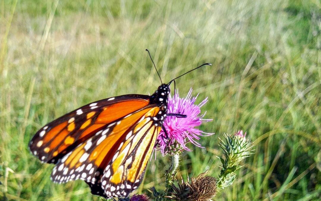 Mensaje de las Mariposas